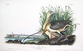 Audubon 1st Edition Octavos for Sale