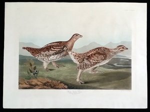 Audubon First Edition Havell Prints For Sale