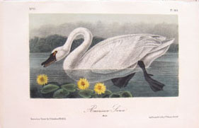 Audubon Later Edition Octavos for Sale