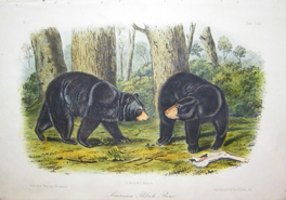 Audubon Quadruped Octavos for Sale