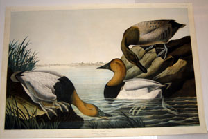 Audubon Bien Edition Prints For Sale